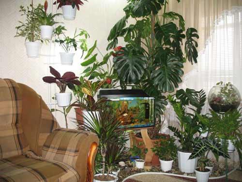 Как обустроить зимний сад в квартире